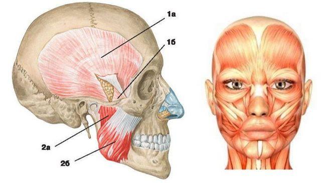 Как меняется лицо после брекетов: какие части преображаются, надолго ли этот эффект у человека, и почему лучше лечение, чем операция?